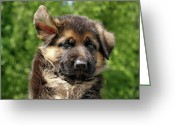 Puppies Greeting Cards - Windy Day Greeting Card by Sandy Keeton