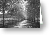 Tree Allee Greeting Cards - Wine Country Napa black and white Greeting Card by Suzanne Gaff