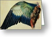 Bleu Greeting Cards - Wing of a Blue Roller Greeting Card by Albrecht Durer