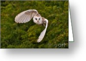 Owl Prints Greeting Cards - Winged Hunter Greeting Card by Peter Chapman