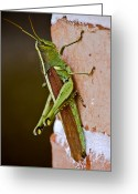 Grasshopper Greeting Cards - Wings in Brown Greeting Card by DigiArt Diaries by Vicky Browning