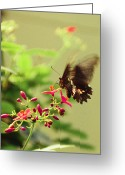 Butterflies Greeting Cards - Wings in motion Greeting Card by Aimee L Maher