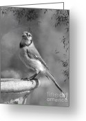 Bluejay Birds Greeting Cards - Wings in My Dreams II Greeting Card by Jan Piller