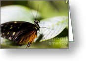 Beauty Mark Greeting Cards - Wings Greeting Card by Leslie Leda