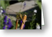 Resting Greeting Cards - Wings sparkling in the sun Greeting Card by ShaddowCat Arts - Sherry
