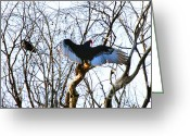 Buzzard Wings Greeting Cards - Wings Greeting Card by Tap On Photo