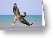 Pelican Photo Greeting Cards - Wingspan Greeting Card by Evelina Kremsdorf