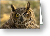 Hunter Photo Greeting Cards - Wink Greeting Card by Mike  Dawson