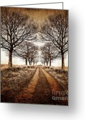Atmospheric Greeting Cards - Winter Avenue Greeting Card by Meirion Matthias