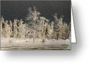 Winter Trees Greeting Cards - Winter Begins Greeting Card by Lois Bryan