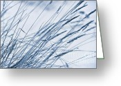 Priska Wettstein Digital Art Greeting Cards - Winter Breeze Greeting Card by Priska Wettstein
