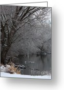 Winter Trees Greeting Cards - Winter Calm Greeting Card by Carol Groenen