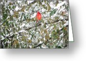Cardinals. Wildlife. Nature. Photography Greeting Cards - Winter Cardinal Greeting Card by Jennifer Wosmansky