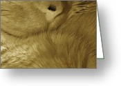 Whiskers Greeting Cards - Winter Coat Greeting Card by Chris Berry