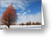 Winter Trees Greeting Cards - Winter Colours Greeting Card by Terence Davis