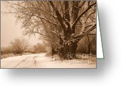 Winter Trees Greeting Cards - Winter Country Road Greeting Card by Carol Groenen