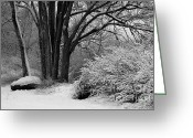 Winter Trees Greeting Cards - Winter Day - Black and White Greeting Card by Carol Groenen