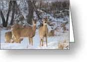 Does. Winter Greeting Cards - Winter Deer Greeting Card by Janelle Streed