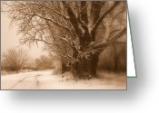 Tans Greeting Cards - Winter Dream Greeting Card by Carol Groenen