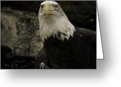 Great Falls Greeting Cards - Winter Eagle Greeting Card by Bob Orsillo