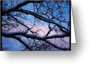 Prestigeclass Greeting Cards - #winter #evening #sky #clouds #tree Greeting Card by Lisa Worrell