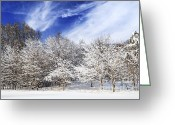 Covering Greeting Cards - Winter forest covered with snow Greeting Card by Elena Elisseeva