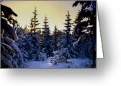 Hakon Greeting Cards - Winter Forest Greeting Card by Hakon Soreide