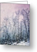 Winter Trees Digital Art Greeting Cards - Winter Forest Greeting Card by Priska Wettstein