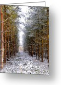 Natural Wolf  Greeting Cards - Winter Forest Greeting Card by Svetlana Sewell