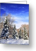 Frost Greeting Cards - Winter forest under snow Greeting Card by Elena Elisseeva