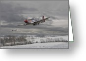 Mustang Greeting Cards - Winter Freedom Greeting Card by Pat Speirs