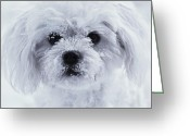 Dog Prints Photo Greeting Cards - Winter Fun Greeting Card by Lisa  DiFruscio