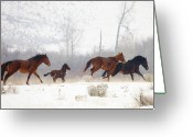Wild Horses Greeting Cards - Winter Gallop Greeting Card by Mike  Dawson