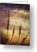 Shimmering Greeting Cards - Winter Gold Greeting Card by Skip Nall