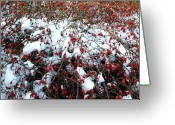 Rose Bushes Greeting Cards - Winter Harvest Greeting Card by Will Borden