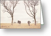 Johannesburg Greeting Cards - Winter In Safariland Greeting Card by photo by Anna Theodora