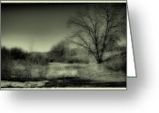 Flood Plain Greeting Cards - Winter in South Platte Park III Greeting Card by David Patterson