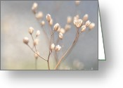 Neutral Colours Greeting Cards - Winter Light Greeting Card by Iris Lehnhardt