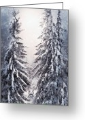 Winter Trees Mixed Media Greeting Cards - Winter Light Greeting Card by Svetlana Sewell