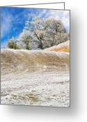 Hedge Greeting Cards - Winter Greeting Card by Meirion Matthias