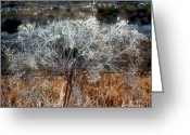 Tumbleweed Greeting Cards - Winter Morning Ice Greeting Card by Stephen Anderson