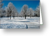 Bright Sky Pyrography Greeting Cards - Winter Morning II Greeting Card by Mira Dimitrijevic