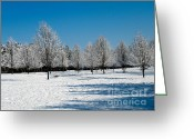Bright Sky Pyrography Greeting Cards - Winter Morning IV Greeting Card by Mira Dimitrijevic
