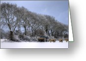 Winter Trees Photo Greeting Cards - Winter Morning On The Farm Greeting Card by Sophie De Roumanie