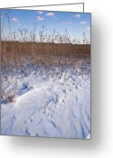 Goose Greeting Cards - Winter On The Prairie Greeting Card by Steve Gadomski