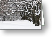 December Greeting Cards - Winter park with snow covered trees Greeting Card by Elena Elisseeva