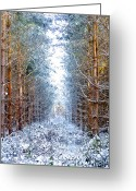 Natural Wolf  Greeting Cards - Winter Path Greeting Card by Svetlana Sewell