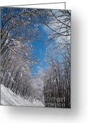Bulgaria Greeting Cards - Winter Road Greeting Card by Evgeni Dinev