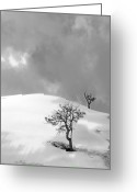 Winter Storm Photo Greeting Cards - Winter Solitude Greeting Card by Viktor Savchenko