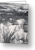 Dogwood Lake Greeting Cards - Winter Spice in Monochrome Greeting Card by Royce Howland